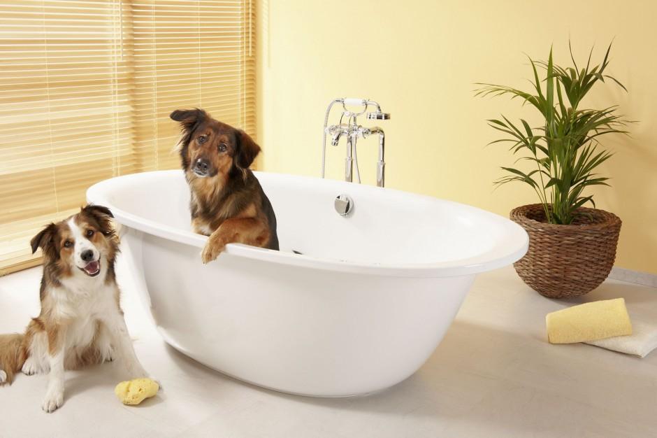 1 lipca obchodzimy Światowy Dzień Psa. Twój najlepszy przyjaciel w łazience