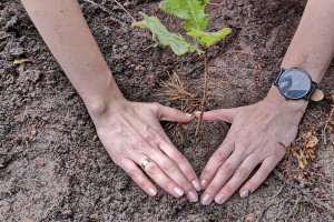 """Elita inwestuje w """"zieloną"""" przyszłość"""